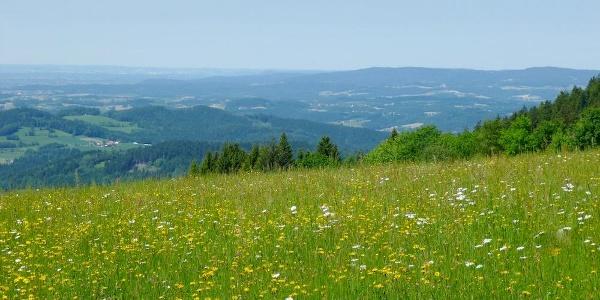 Aussicht von Grandsberg