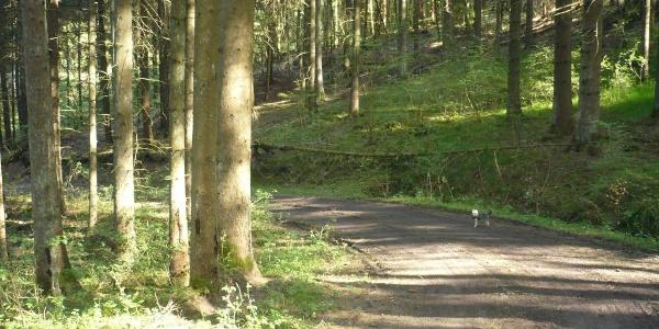 Fombachweg durch Fichtenwald
