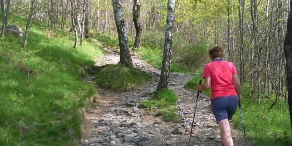 Waldanstieg bei Monti di Breglia