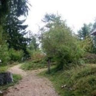 Baumlehrpfad in Dachsberg