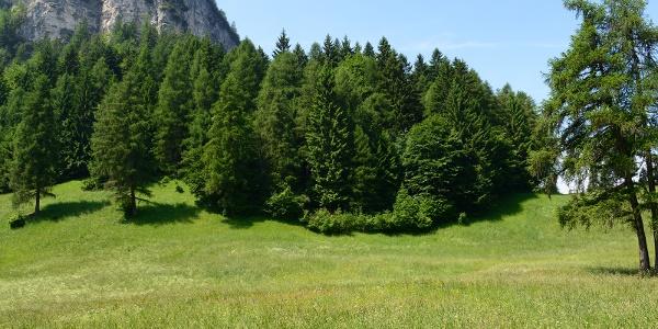 Boschi e prati idilliaci nel parco naturale Monte Corno