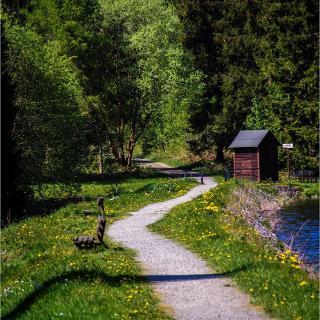 am Bärenbrucher Teich (137)