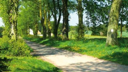 Baumallee auf dem Märkischen Landweg