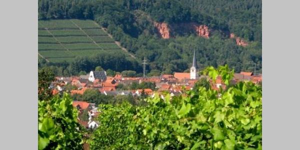 Weinberge Bürgstadt