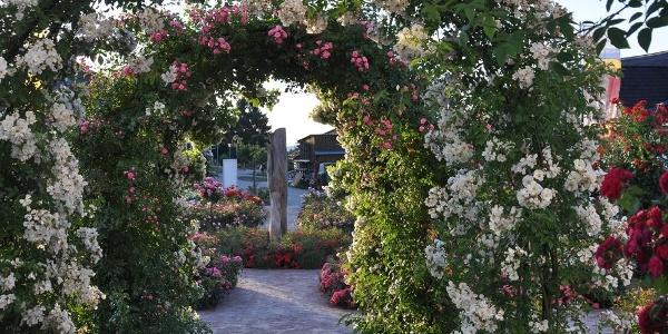 Ein Highlight  ist der Rosen Sortimentsgarten