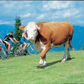 Mit dem Mountainbike auf die Scheibe