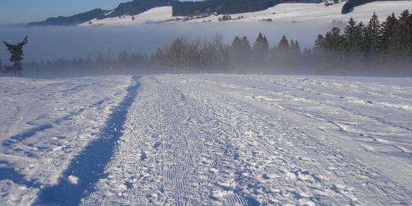 Winterlandschaft am Hanusel Winterwanderweg (2)
