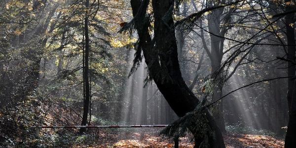 Wald Barkhauser Berge