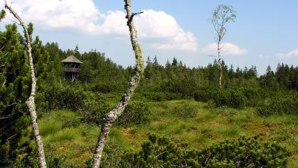 Dürberger Moor