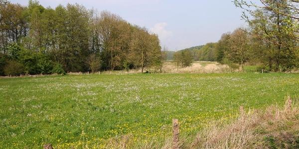 NSG Kilverbachtal