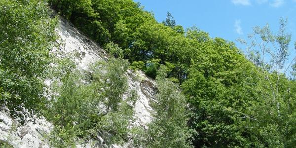 Auf den steilen Geröllschutthängen am Teufelskadrich gedeihen Wärme liebende Wälder.