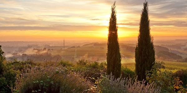 Sonnenaufgang bei Gleiszellen