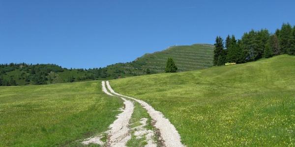 Lupo Bianco – Rifugio Valentini al Passo Sella.