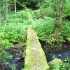 Kleine Brücke im Wald