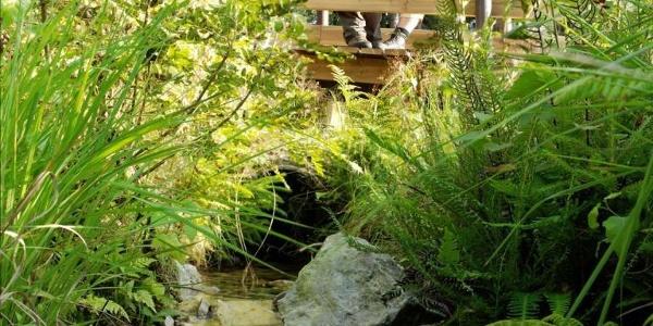Holzsteg im Ortelsbruch