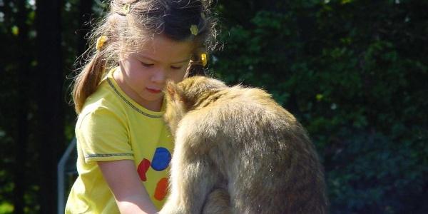 Kind beim Füttern eines Berberaffen