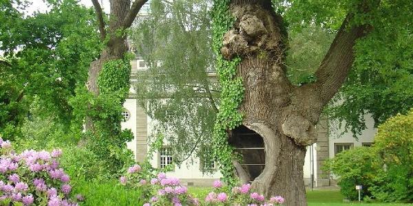 Die ältesten Eichen in Kurpark