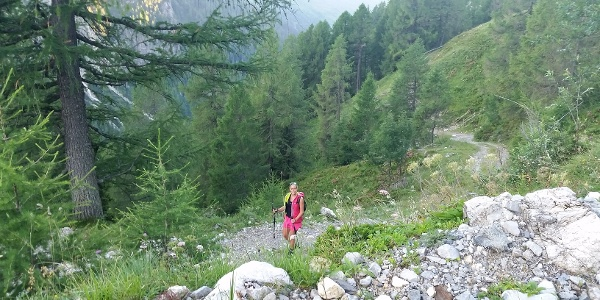 Anstieg über Forststraßen zur Franz Josef Fischer Hütte
