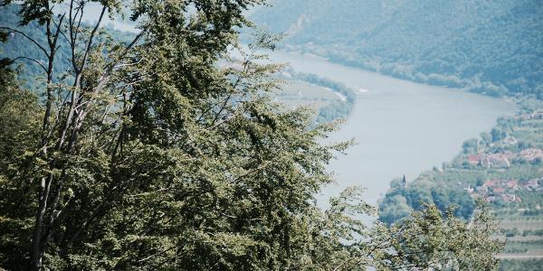 Blick auf die Donau richting Osten