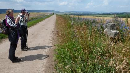 Mittelalterliches Wegekreuz vor Rüxleben