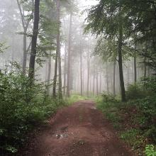 Im Heltersberger Wald
