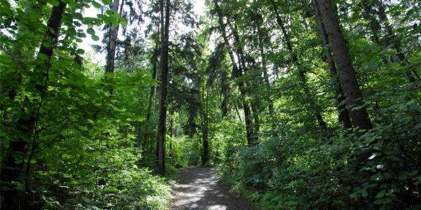 Schaaner Wald
