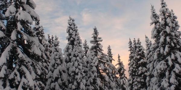 Bosco d'inverno