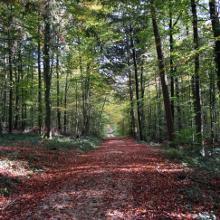 Lange Waldwege