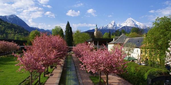 Kurgarten Kirschblüte