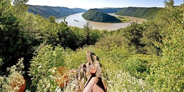 Donaublick vom CICONIA-Weg auf die Schlögener Schlinge