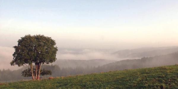 Wandertour in der südlichen Eifel: Prümer Land Tour Route 1 - Prüm und Umgebung