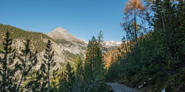 Der Weg schlängelt sich von La Drossa dem Hang entlang Richtung Alp la Schera. Im Hintergrund der Piz dal Fuorn.