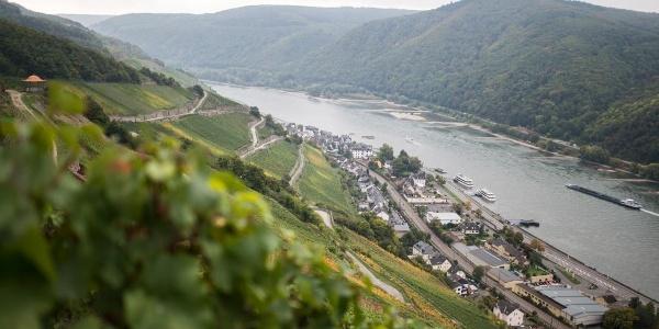 Rhein- und Rebenpanorama mit Blick auf Assmannshausen im Rheingau