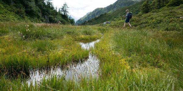 kurz vor dem Gruebenseeli geht es durch ein kleines Moor