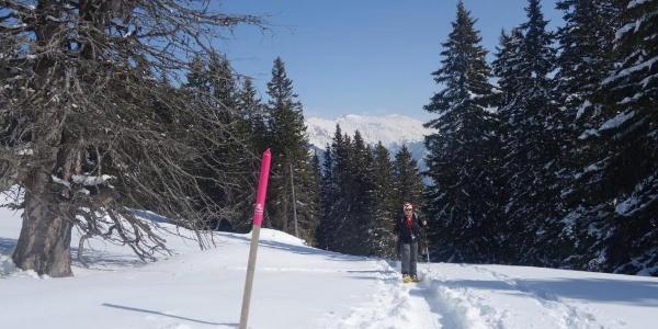 Aufstieg nach dem Spundiswald