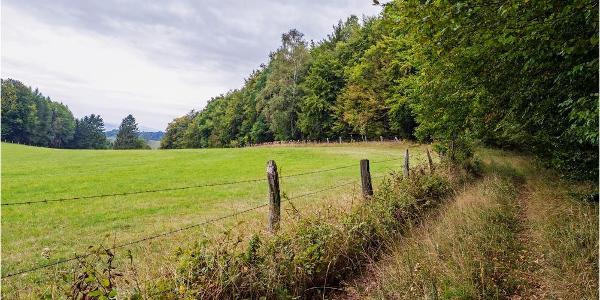 Karstwanderweg bei Scharzfeld