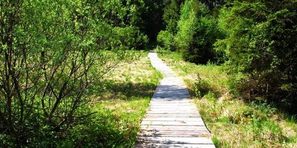 Steg ins Birkenmoor