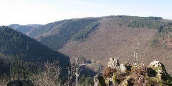 Blick ins Tal der Kleinen Dhron