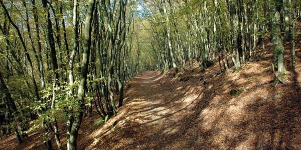 Baybachtal Weg