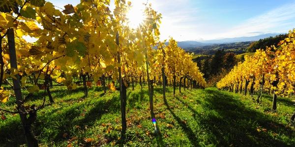 Herbst im Weinland Steiermark