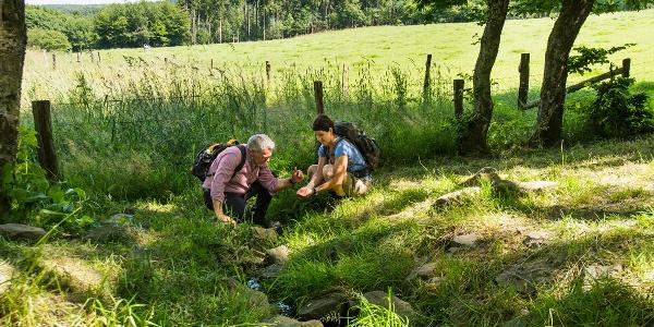 Het kleine stroompje uit de bronvijver is het begin van de Lahn - Etappe 1