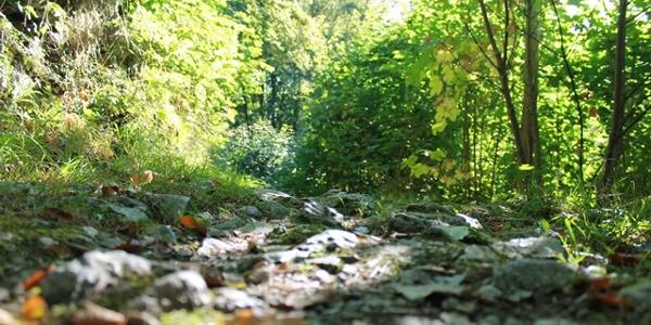 Schöne Wege im Naturschutzgebiet Drübel