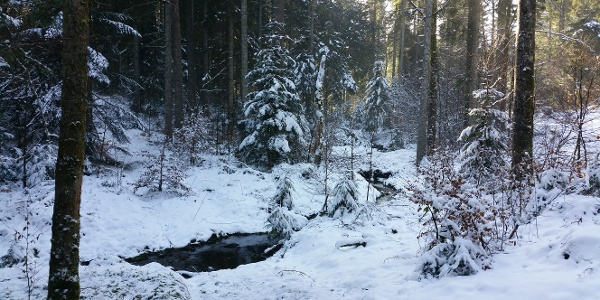 Das Lauterbächle im Winter