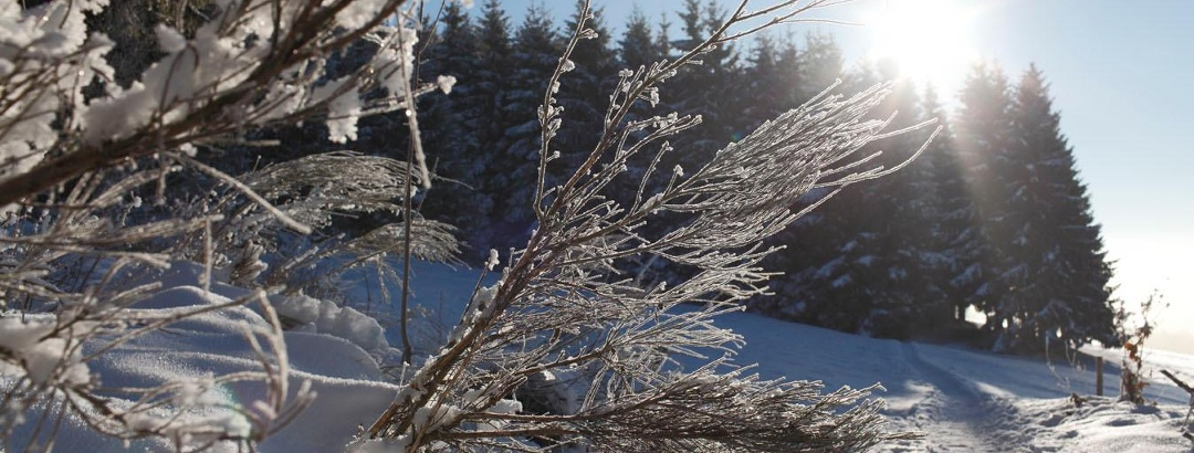 Winterwanderweg