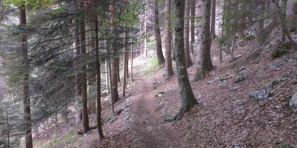 Prima parte del trail.