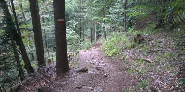 Seconda parte del trail.