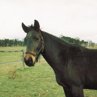 Pferd auf dem Reiterhof Janismühle