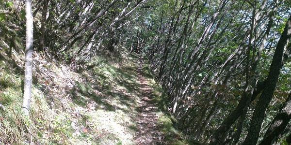 Trail oberhalb Zambana Vecchia