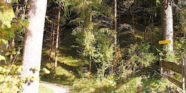 Übergang zum geschotterten Waldpfad