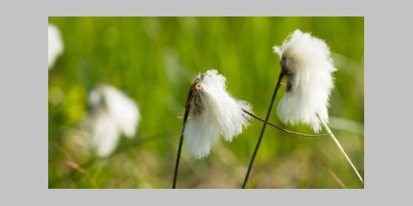 Flora und Fauna Trauntal
